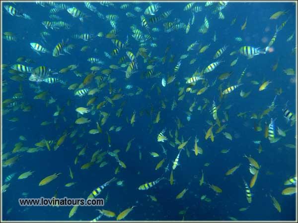 Pantai Lovina snorkeling