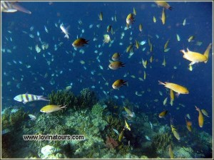 snorkeling Lovina