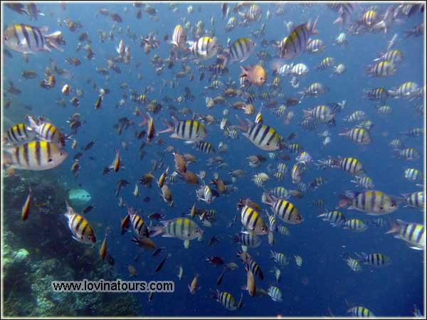 harga snorkeling