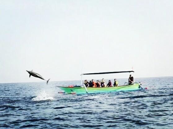 Lumba Lumba dan snorkeling Lovina